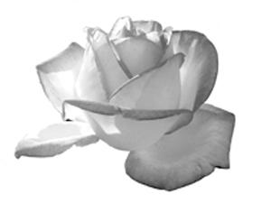 一輪のバラ(そのⅠ)
