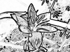 歩道に置かれた鉢の花
